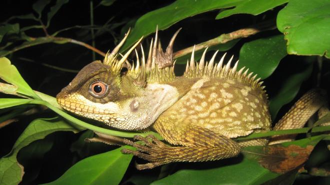 Los animales fantásticos se encuentran en el Mekong
