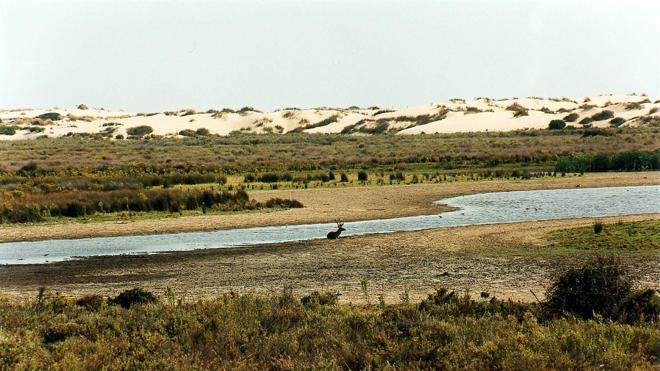 El Gobierno subvenciona el gaseoducto de Doñana mientras insiste en que el parque preserva su valor natural