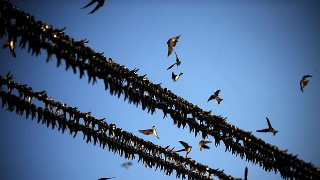 La Gota de Leche muestra las 'Aves de La Rioja'