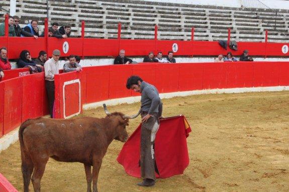 En busca de futuros toros de lidia