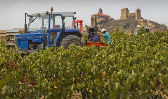 La vendimia marca precios de entre 78 y 90 céntimos para el kilo de uva tinta