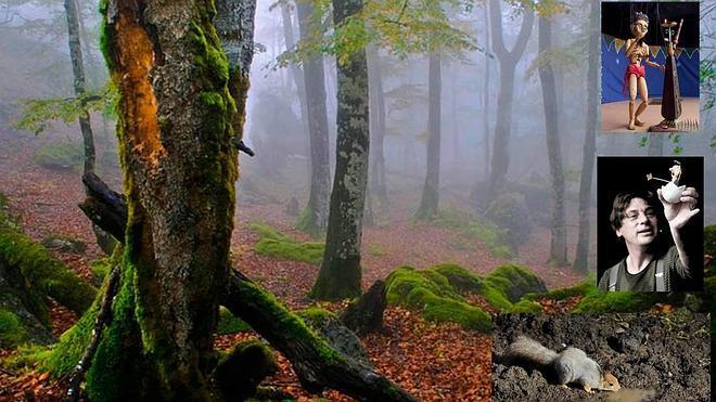 El bosque mágico de Sierra Cebollera